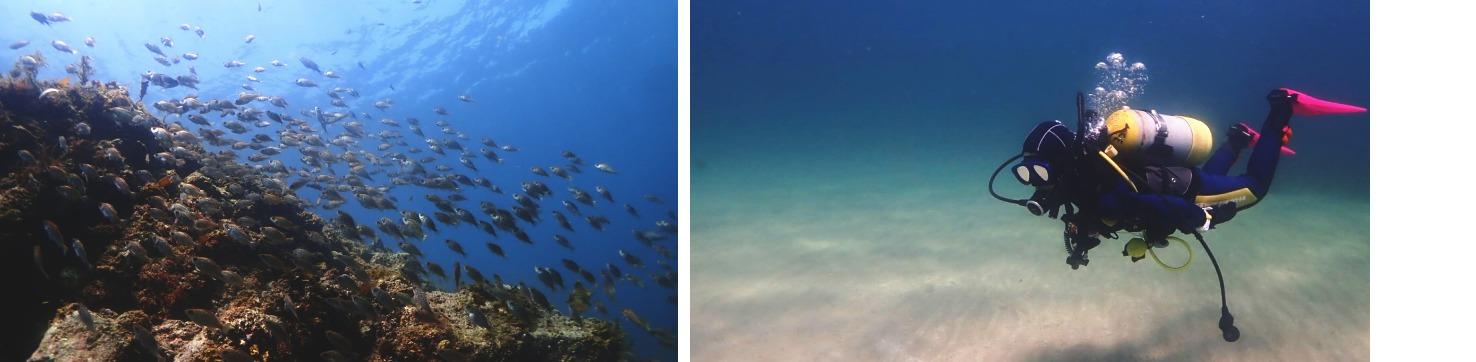 志賀島 水中撮影
